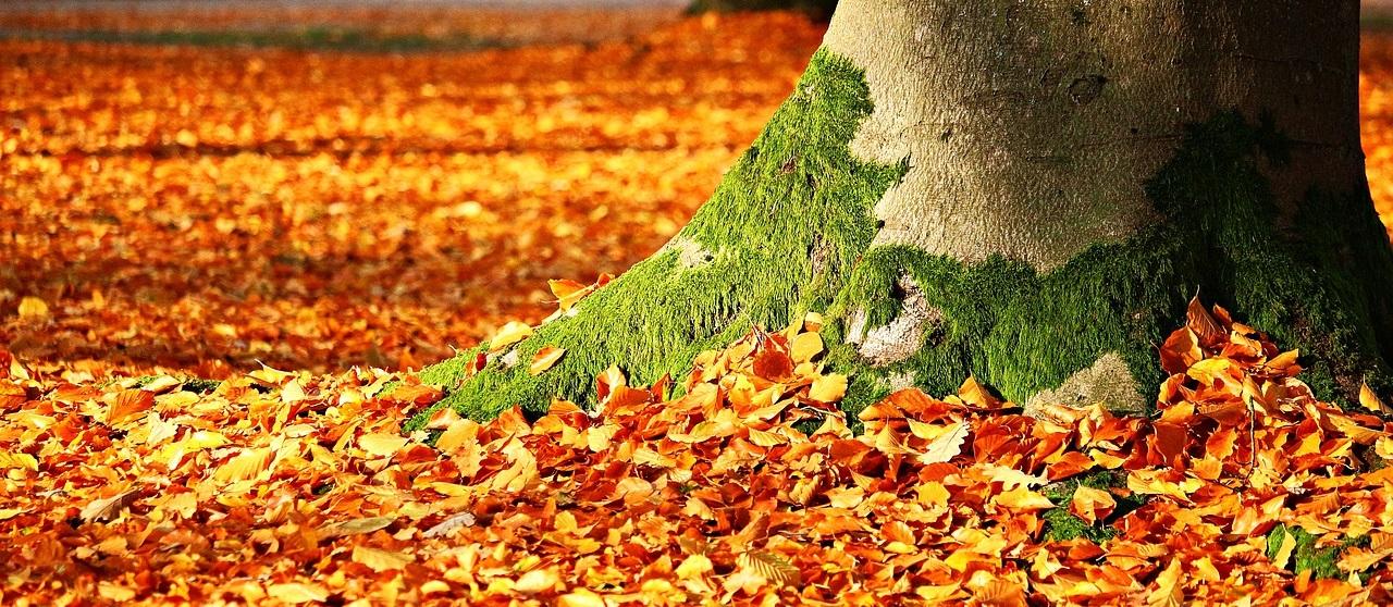 autumn walk in Bristol
